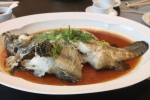 Steamed live tiger Garoupa fish